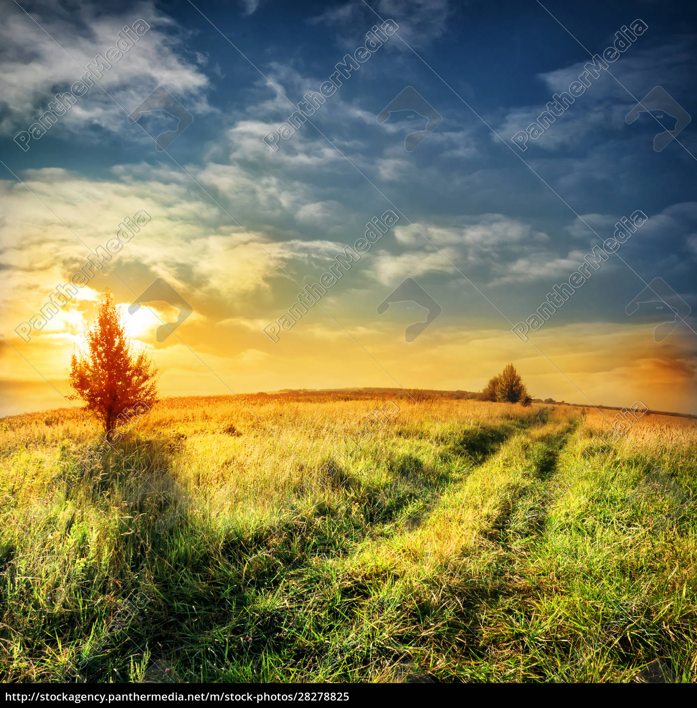 road, in, field, on, a, background - 28278825