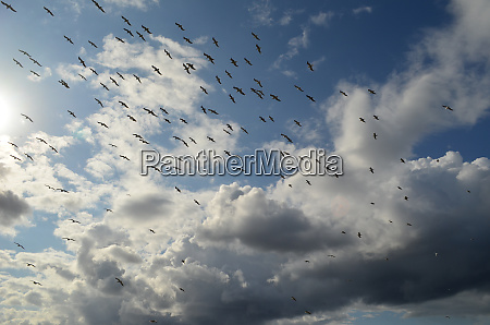 the, flock, of, birds, in, the - 28278692