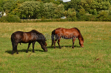the, pair, of, beautiful, horses, are - 28278639