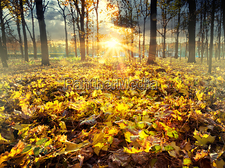 autumn, leaves, in, city, park - 28279559