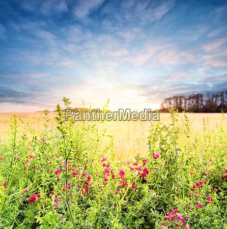 beautiful, wildflowers - 28279666