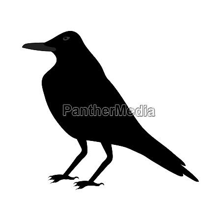 black, crow - 28279215