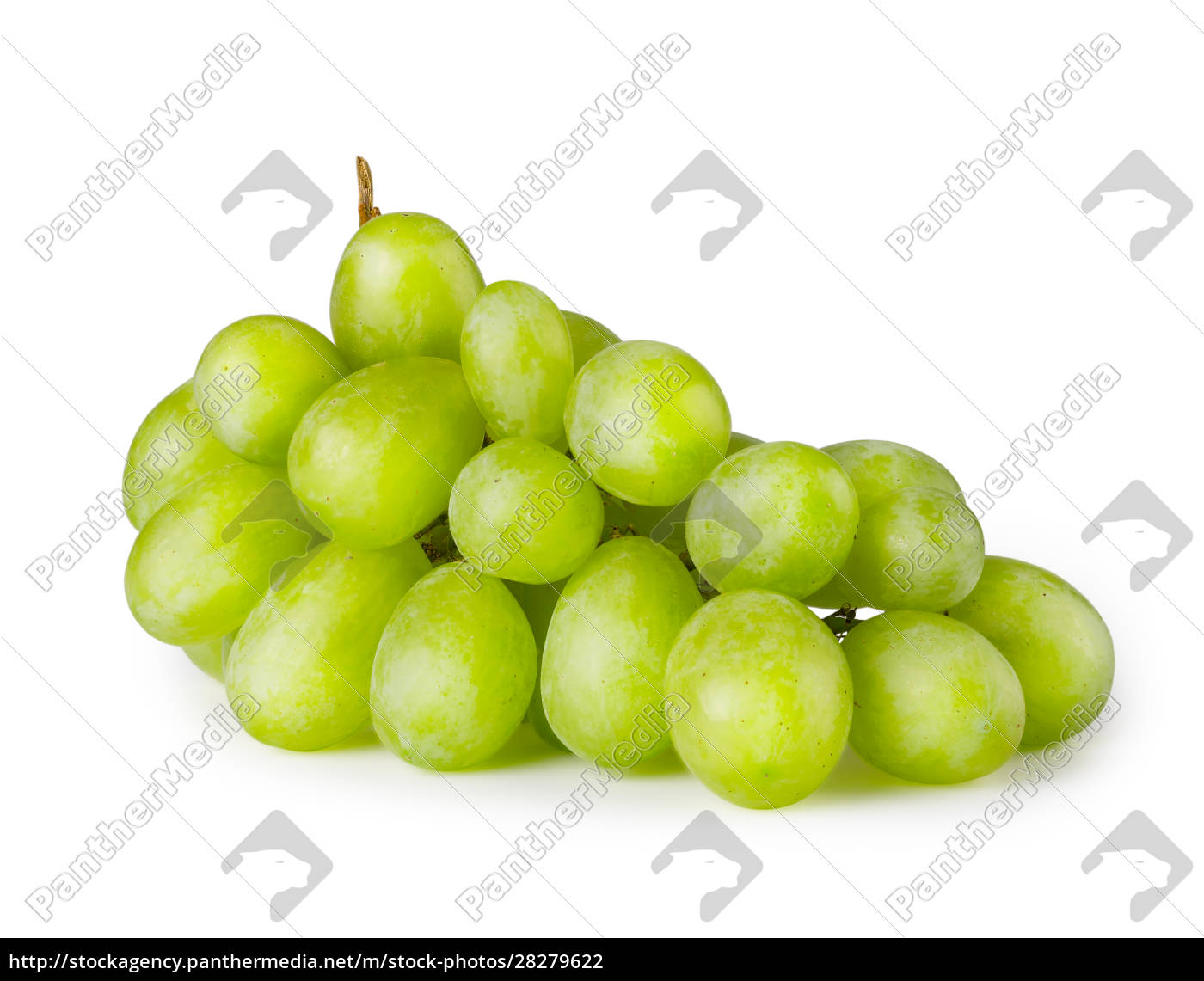 bunch, of, ripe, green, grapes - 28279622