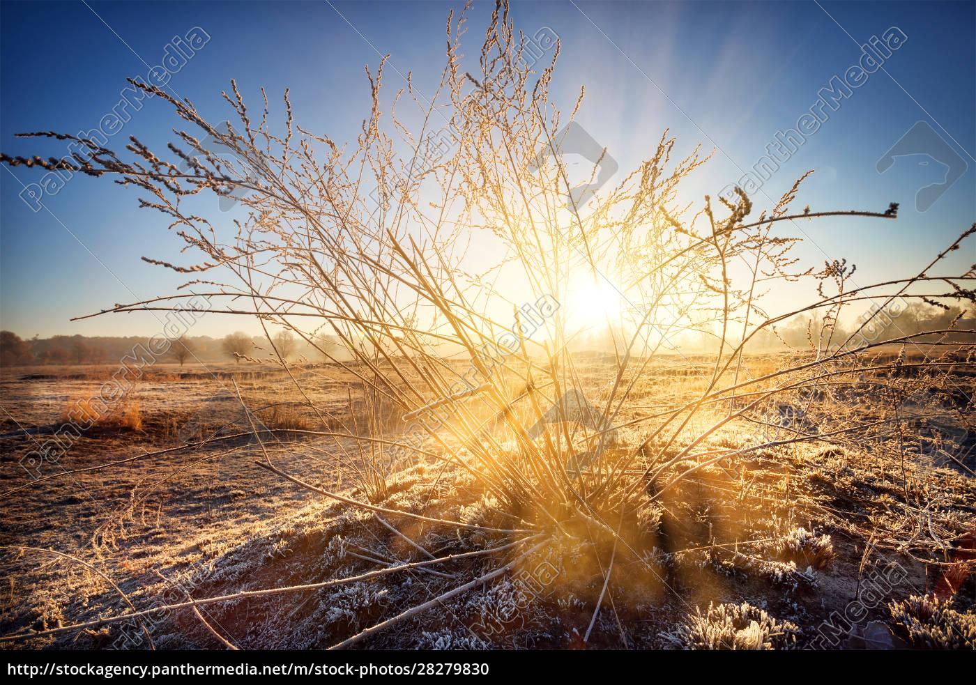 dawn, sun, breaks, through, the, bush - 28279830