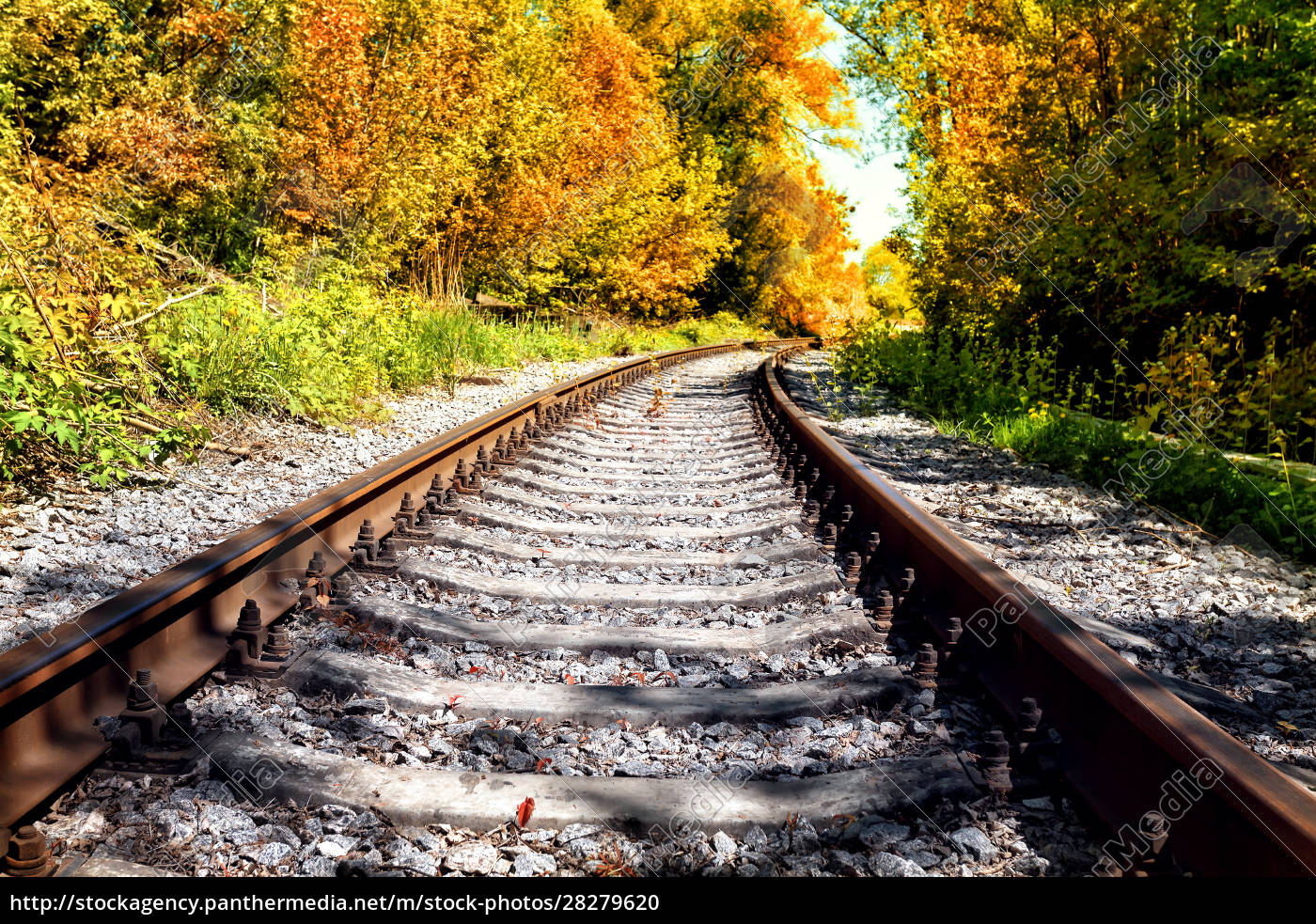 railroad, in, autumn, forest - 28279620