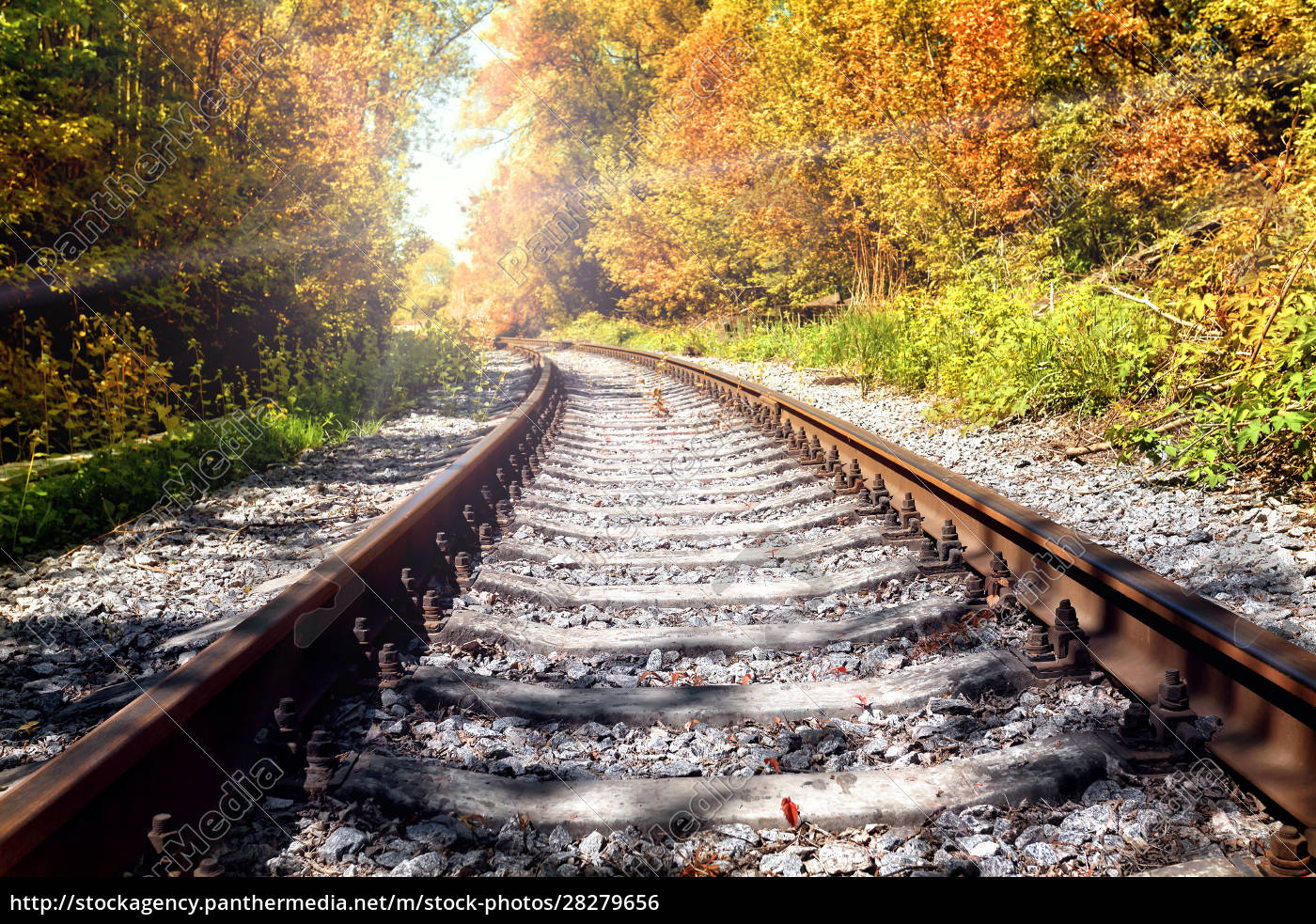 rusty, railroad, in, autumn, forest - 28279656
