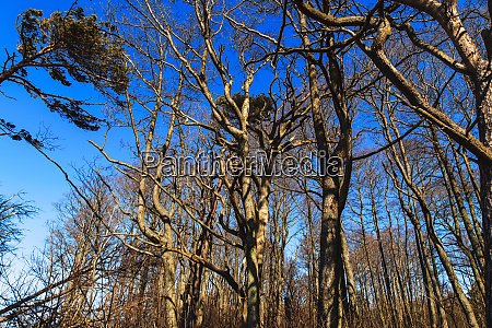 spooky, leafless, trees, with, crooked, branches - 28279092