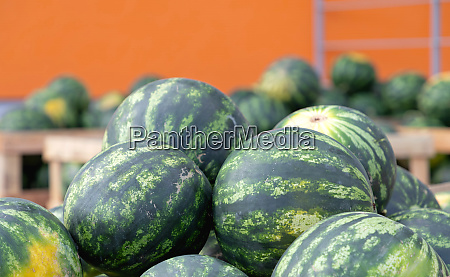 watermelons, green - 28279279