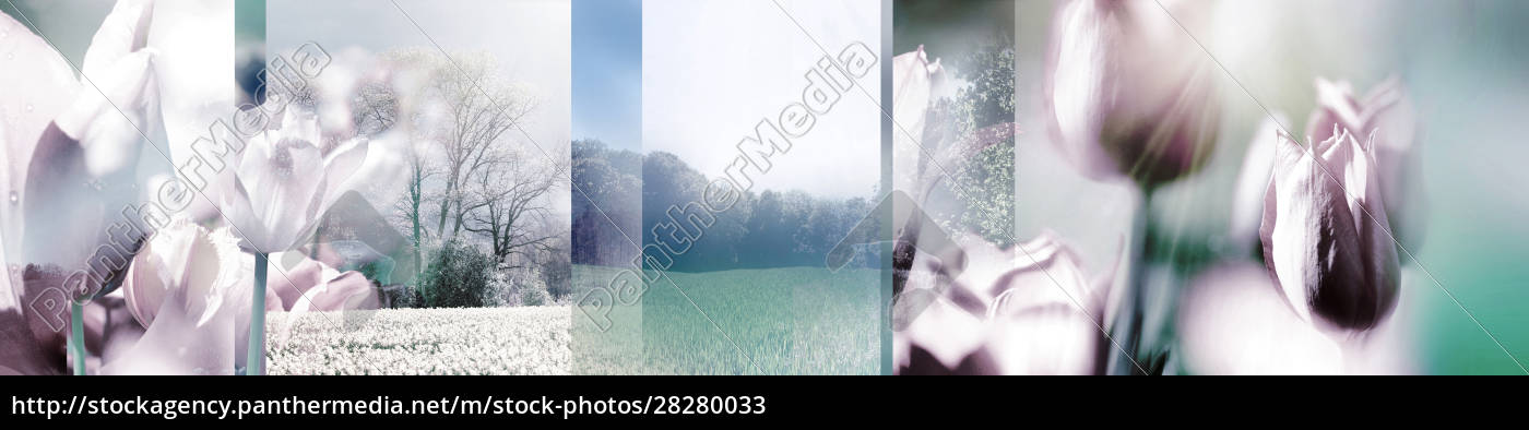 tulips, and, landscapes, , collage, , photomontage - 28280033