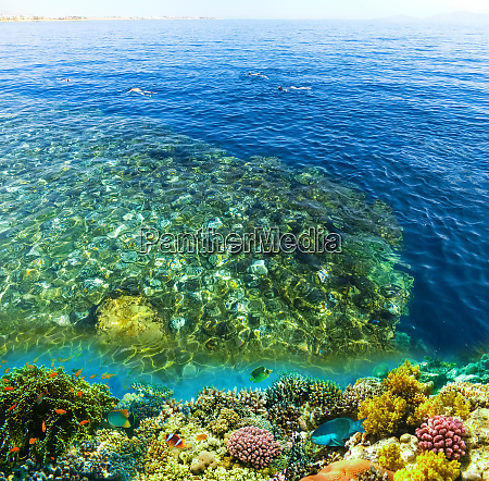 coral pillars in the red sea