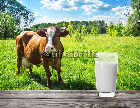 glass of milk against meadow background