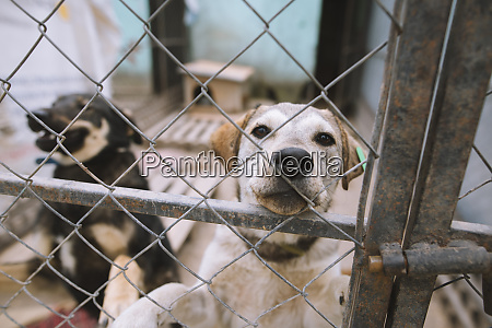 dogs behind fence in animal shelter