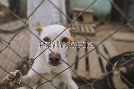 portrait of dog behind fence in