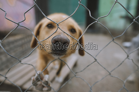 portrait ofsad dog behind fence in