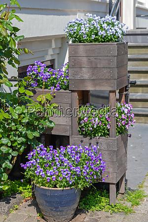 purple flowers pot