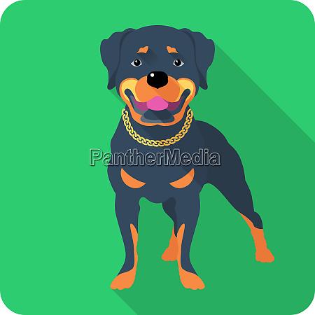 dog rottweiler icon flat design