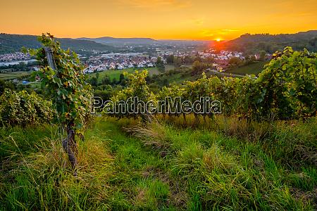 sunset in vineyard in summer