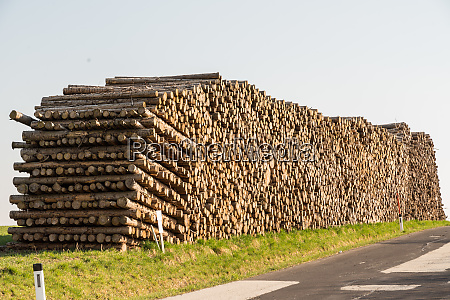 tree trunks from afforestation forestry