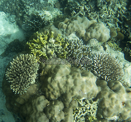 the wonderful sea life in togean