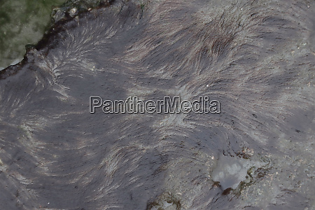 seaweed after low tide