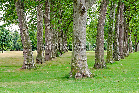 trees in row