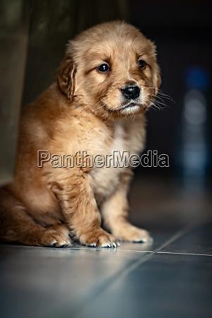 cute little puppy