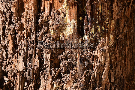 tree trunk eaten by termites in