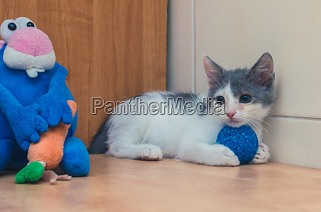 funny little kitty and toy blue