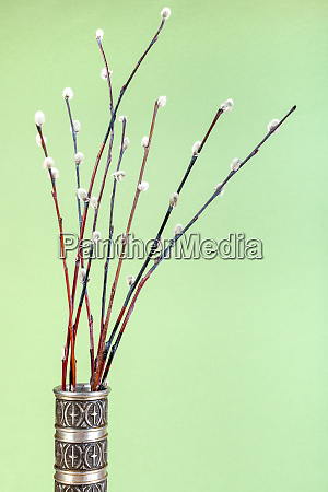 downy pussy willow twigs in pewter