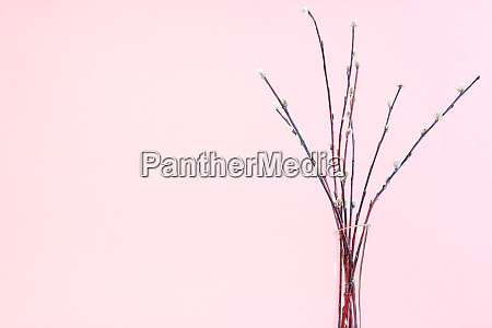 bundle of flowering pussy willow in