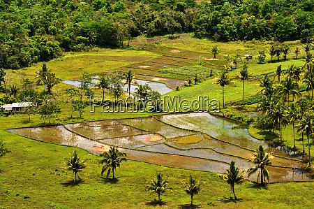 rice fields near carmen on bohol