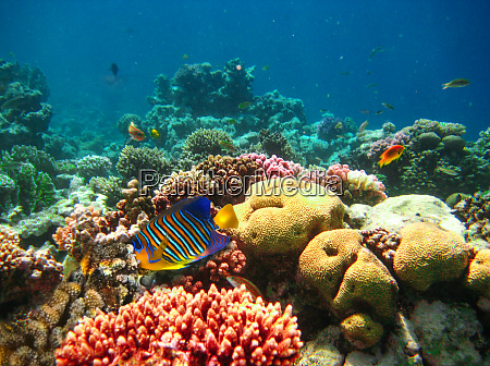 underwater, world., coral, fishes, of, red - 28353264