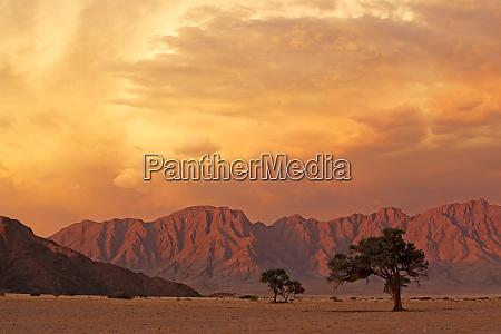 namib desert landscape at sunset