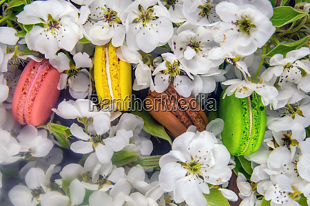 spring branches of a blooming apple