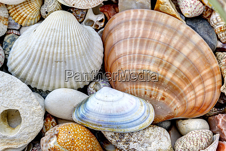 pebble stones and scallops and shells