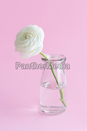 spring composition with a white flower