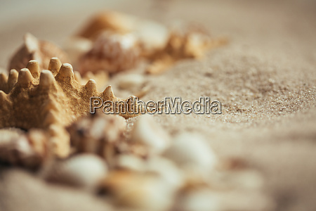 starfish in the sand selective focus