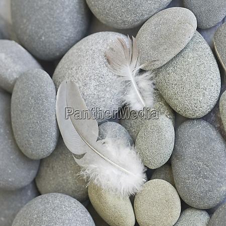 zen style feather still life