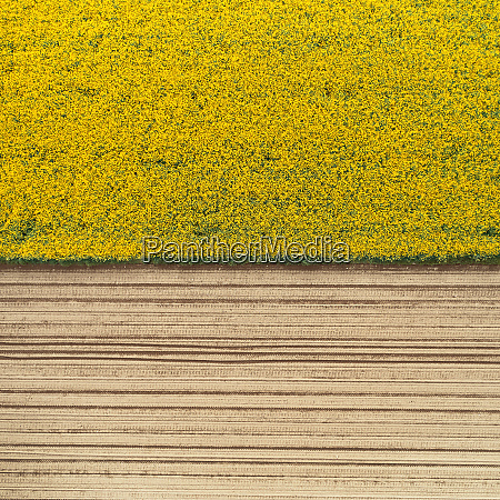 aerial view of a cultivation field