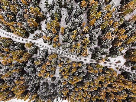 aerial view of forest road through