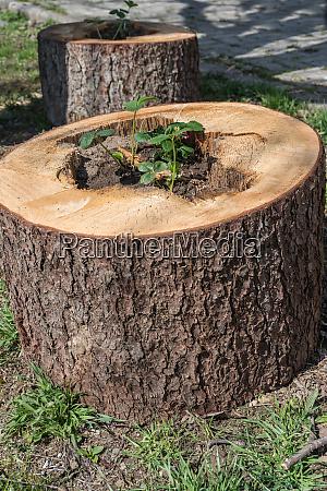original garden decoration tree stump