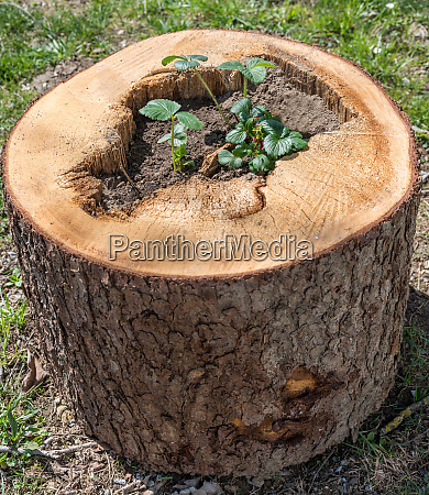 tree trunk planted garden decoration