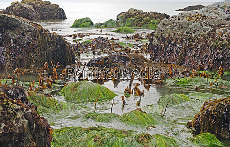 colorful sea weeds and grasses at
