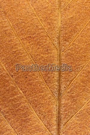 dry leaf tree texture macro closeup