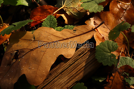 dry leaves with weathered plank springs