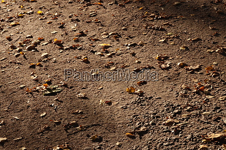 forest park footpath strewn by dry