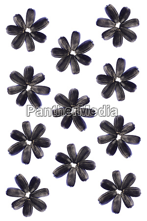 sunflower seeds flower pattern isolated background
