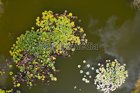 small lake drone view