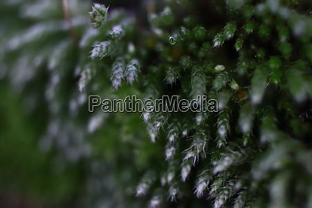 blossom moss texture background macro closeup