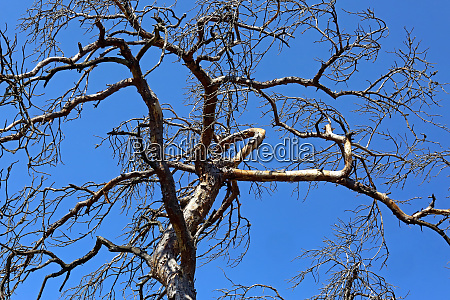 leafless treetop and blue sky